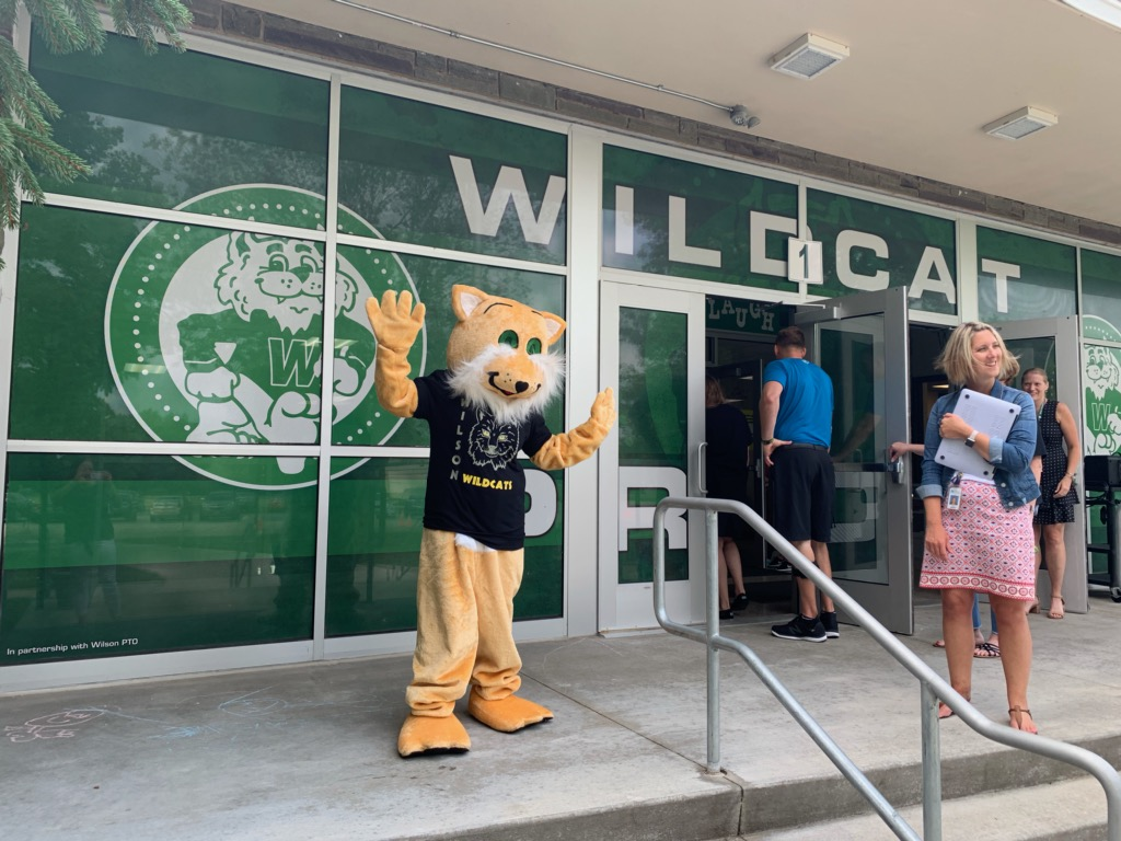 Reintroducing Willy The Wildcat